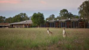 Wildman Wilderness Lodge - Accommodation Adelaide
